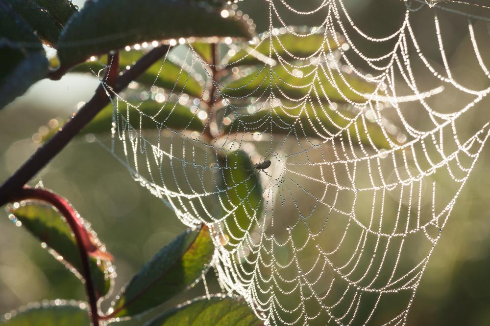 spiderweb in sunlight